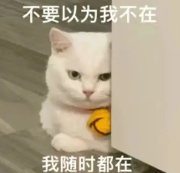 你老公走了吗猫猫表情包 你老婆走了吗猫咪表情包