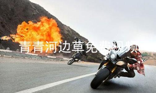 青青河边草免费视频