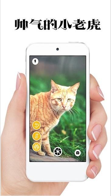 极简猫咪相机软件截图1