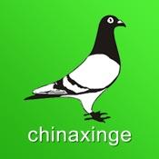 中国信鸽信息网
