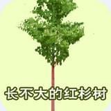 长不大的红杉树童话故事