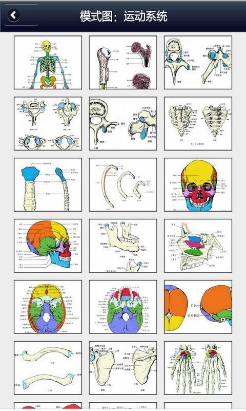 解剖学知识软件截图1