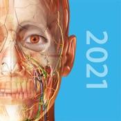 2019人体解剖学图谱