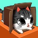 盒子里的猫咪