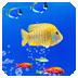 海底世界动态壁纸软件截图0