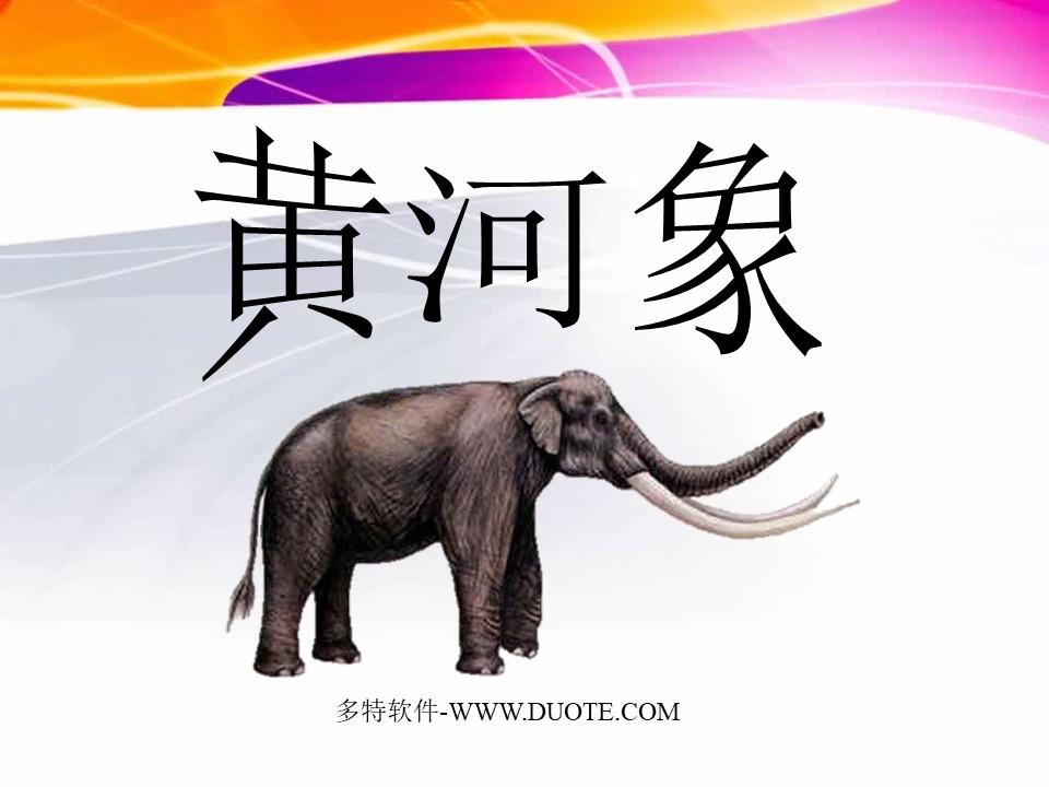 《黄河象》PPT课件4下载