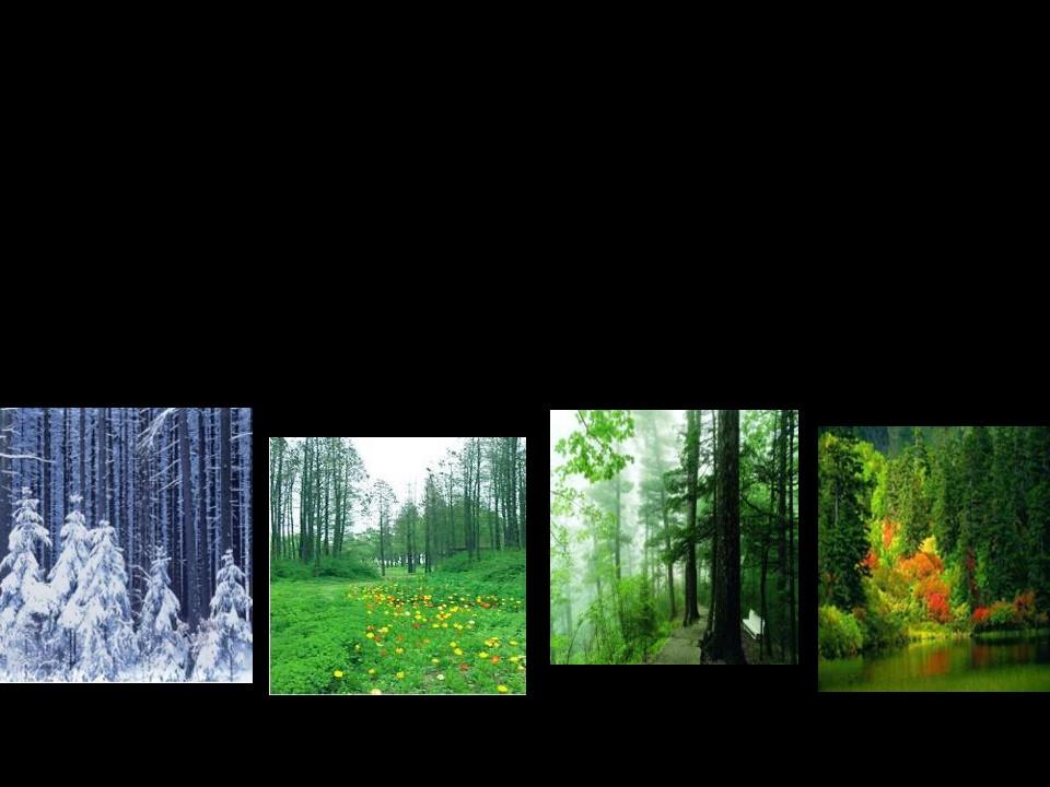 《东北大森林》PPT课件2下载