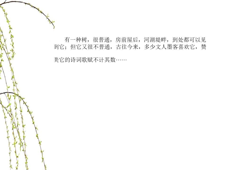 《杨柳》PPT课件2下载