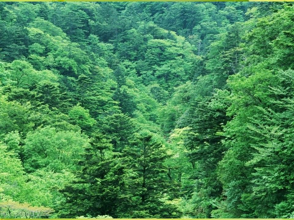 《我爱在林中漫步》PPT课件下载