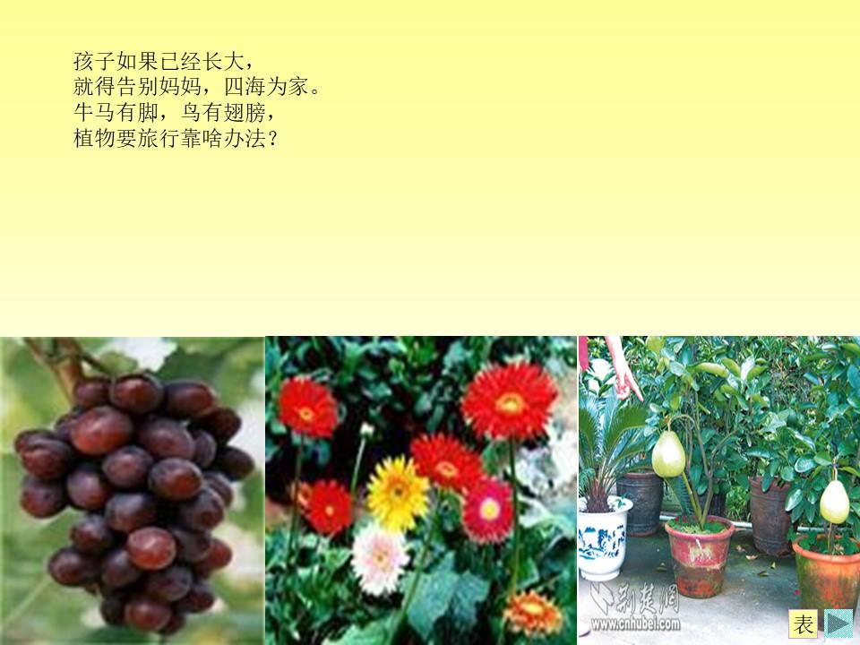《植物妈妈有办法》PPT课件下载