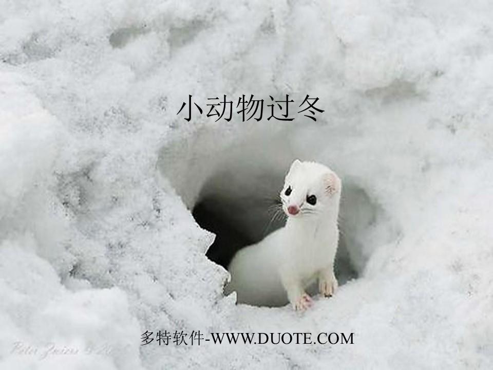 《小动物过冬》PPT课件4下载