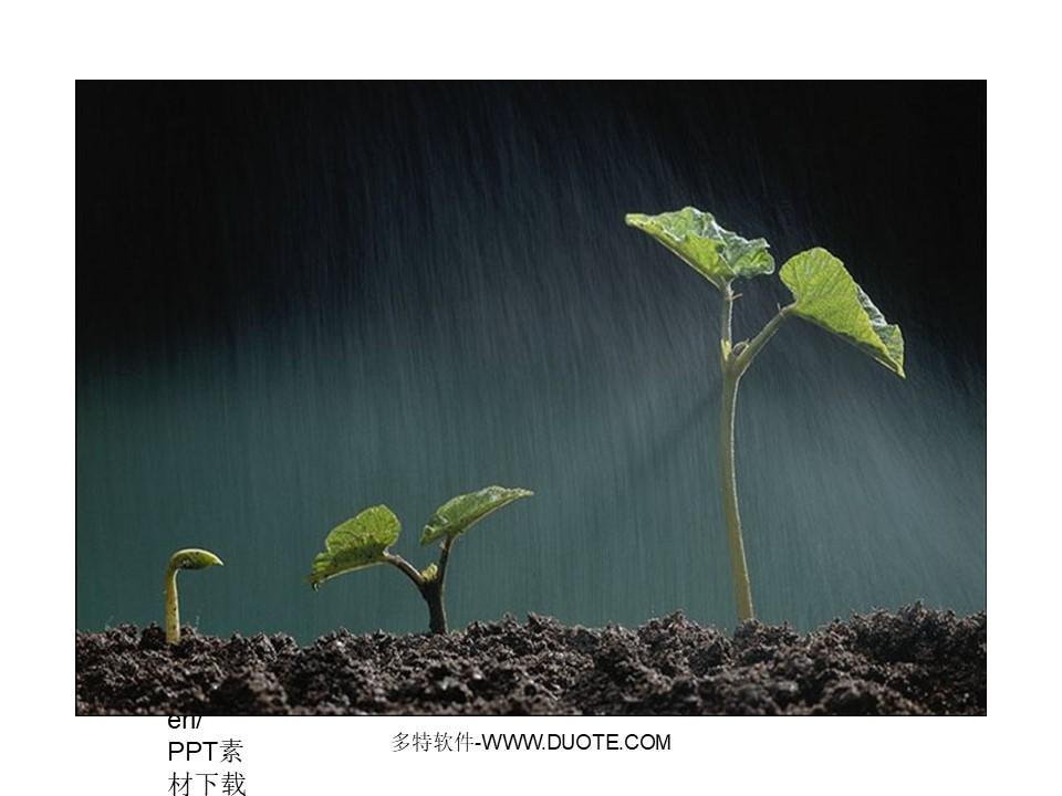 《春光染绿我们双脚》PPT课件2下载