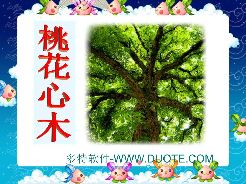 《桃花心木》PPT课件4下载