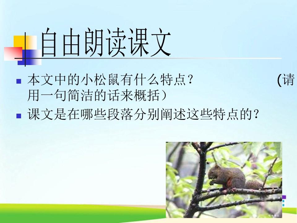 《松鼠》PPT课件下载2下载