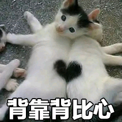 猫咪比心动图表情包大全 猫拿荧光棒gif表情包动图